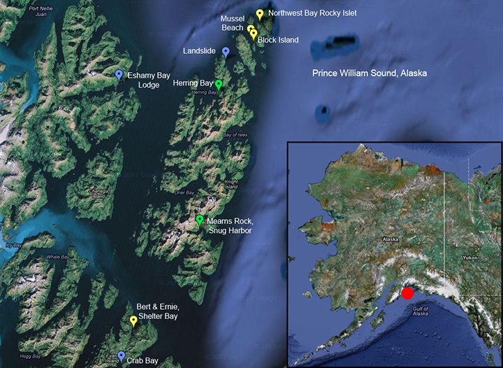 The locations of intertidal boulders in NOAA study in southwest Prince William Sound, Alaska, with Alaska map inset.