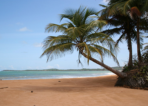 Palm trees and tropical beach in Puerto Rico.
