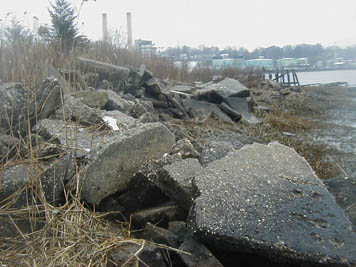 Rip rap along river at the Applied Environmental Sciences Site prior to restoration.