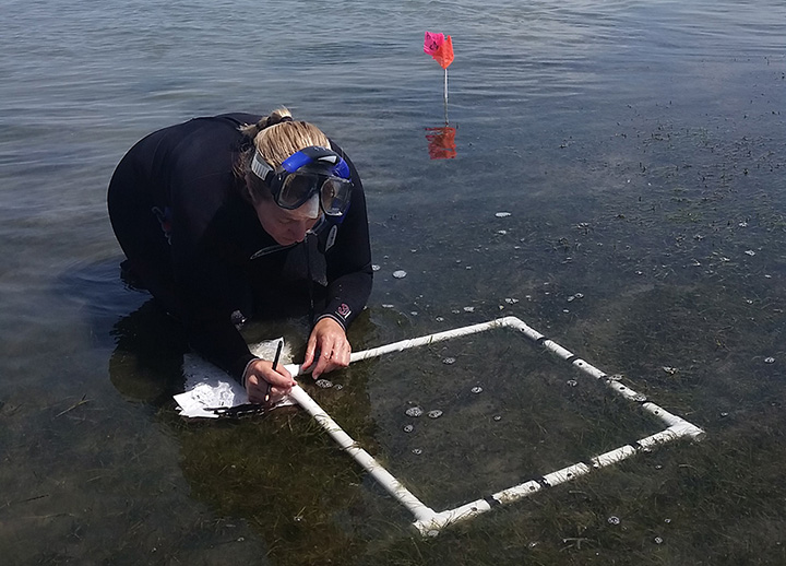Amy Uhrin stands in shallow water documenting data about seagrass inside a square frame of PVC pipe.