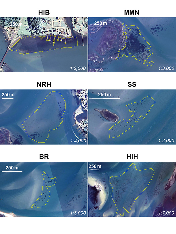 Six aerial photographs of seagrass habitat off the North Carolina coast, with yellow boundary lines drawn around general areas of seagrass habitat.