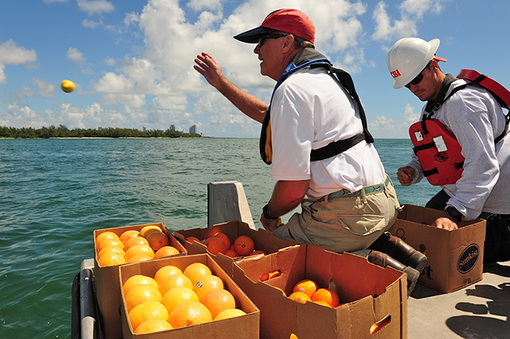 Responders toss oranges, grapefruits, and lemons into the water near Biscayne Bay, Florida, during an oil spill response exercise.