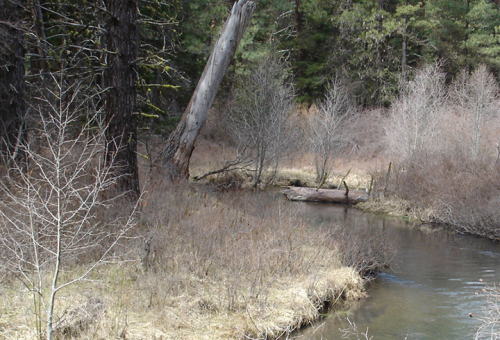 View of a creek with vegetation on both sides.