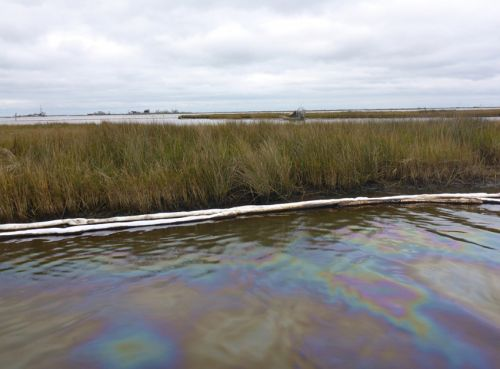 Sorbent material near vegetation; oil slick on the water.