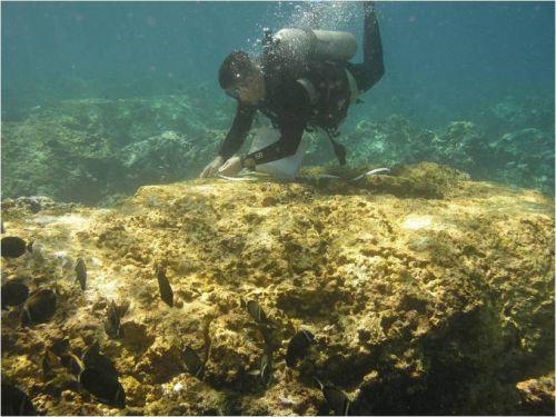 Diver atop coral underwater.