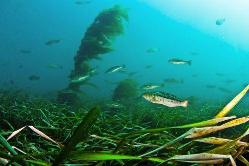 Grasses and fish underwater.