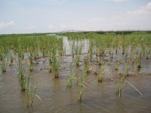Photo: Restored wetland in Port Arthur, Texas.