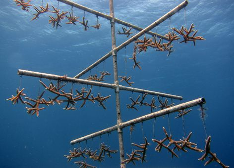 An underwater structure holding small corals.