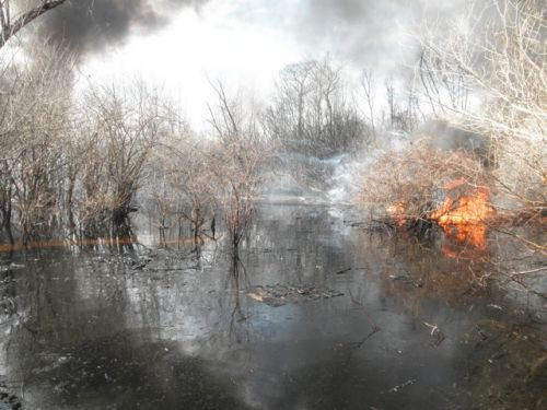 Image of a controlled burn of an oil spill in a Louisiana swamp.