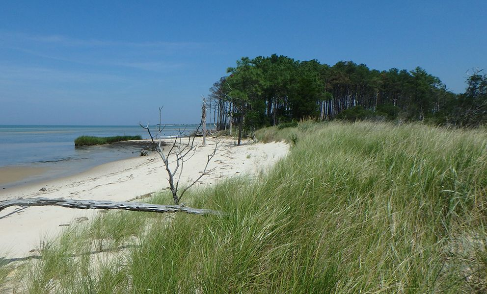 Sand beach, beach grass, trees in background.