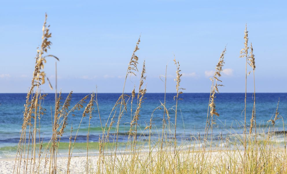 Grasses on beach in front of ocean.