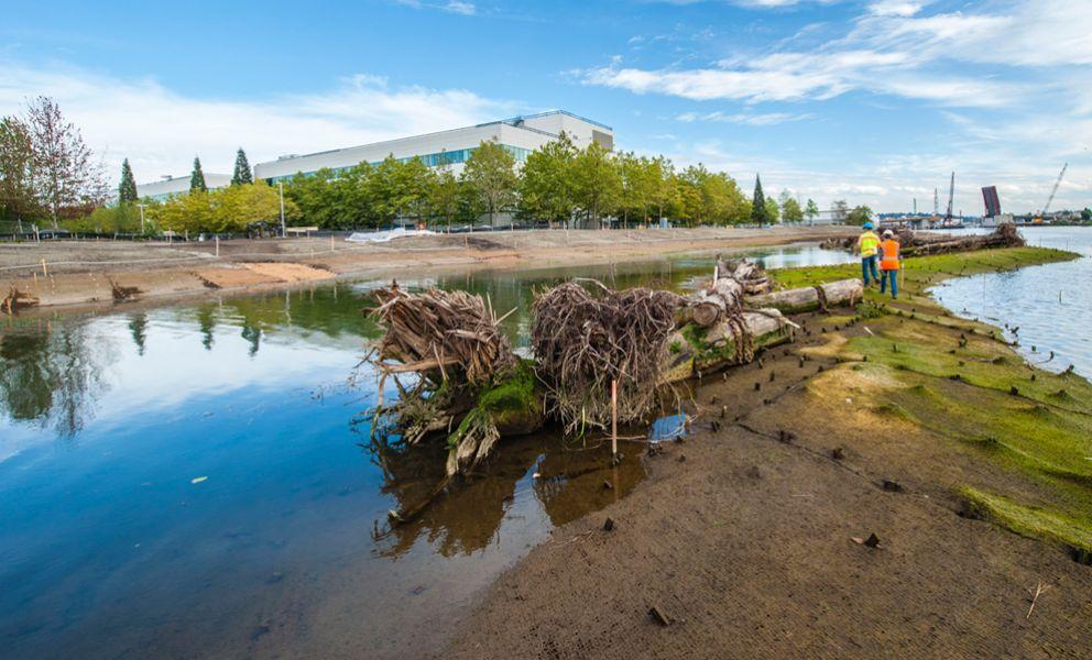 Restored river shoreline with large logs.