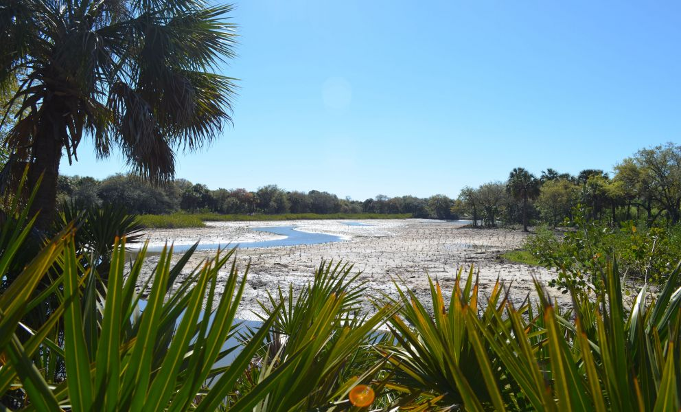 Restored salt marsh surrounded by palms and grasses in Florida.