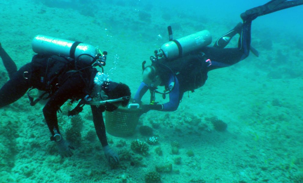 Two SCUBA divers gather broken corals from the seafloor into a basket.