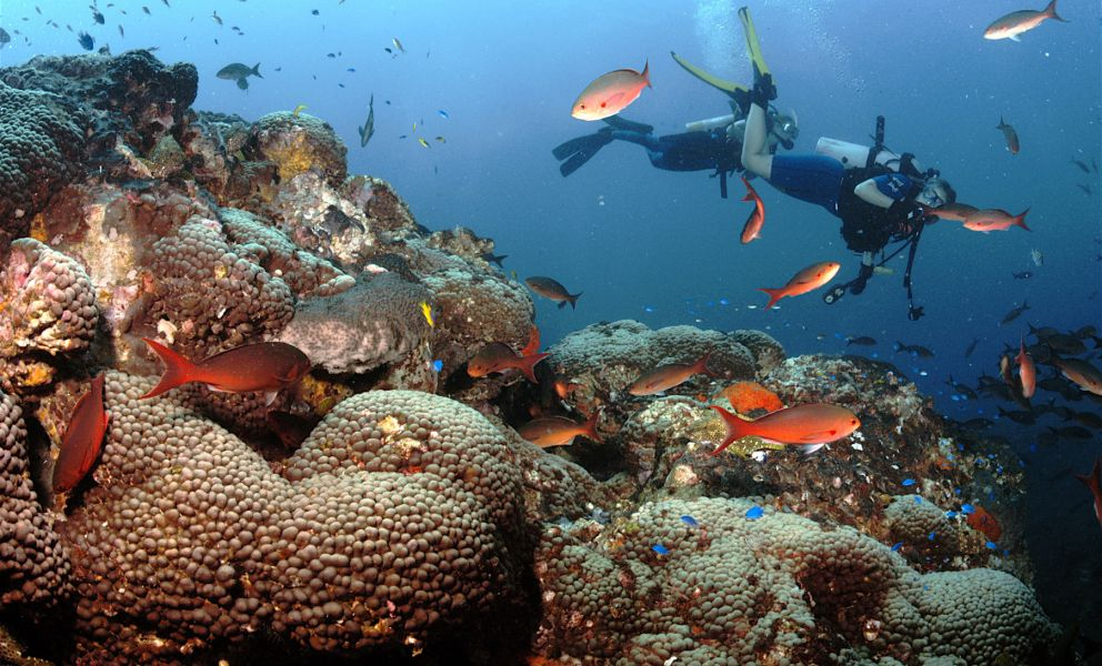Scuba diver near coral reef.