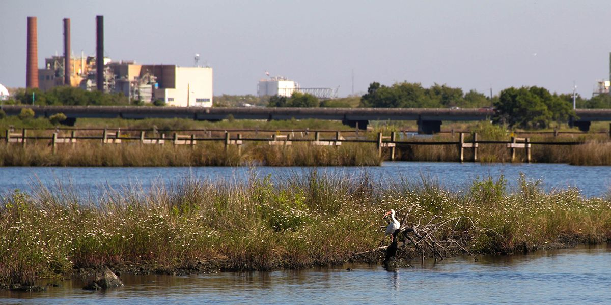 A bird sitting on a branch in a river with an industrial shoreline in the background.