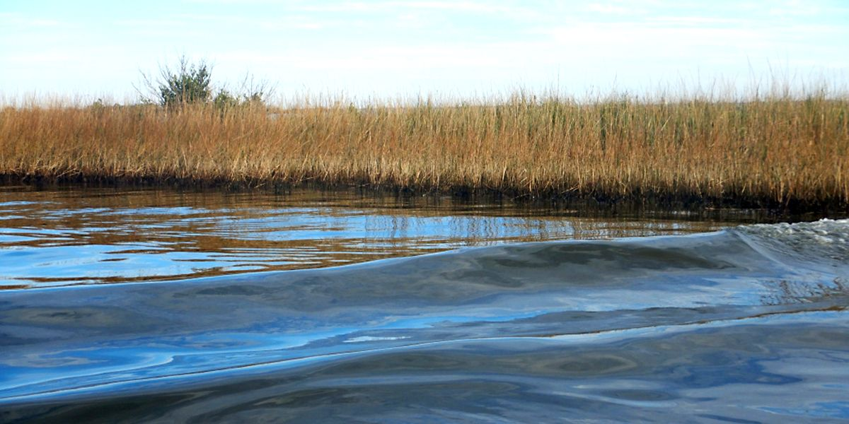 A line of oil visible in the marsh across the water.