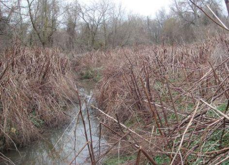Brown reeds along creek bank.