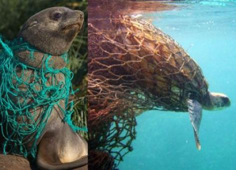 Animals entangled in nets. NOAA.