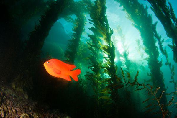 A fish in seaweed.