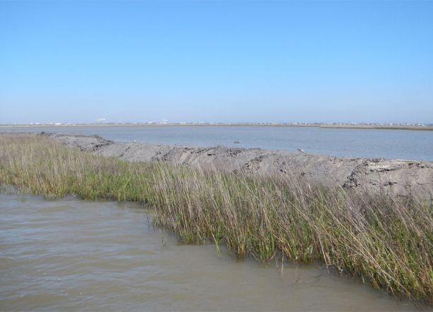 Marsh grass with body of water in background.