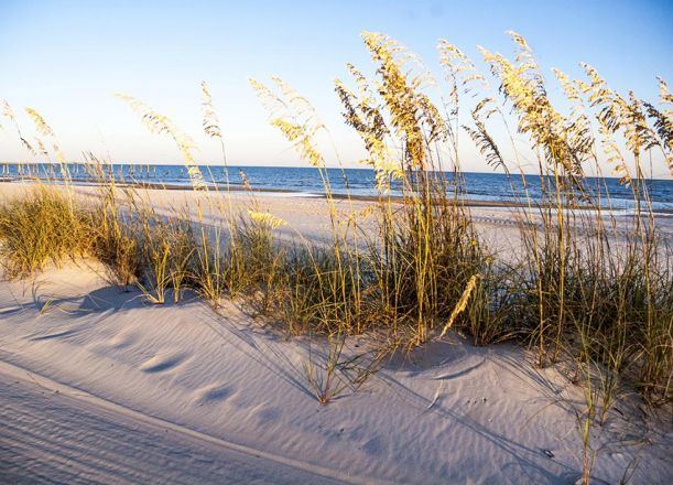 Clean beach, reeds, water in background.