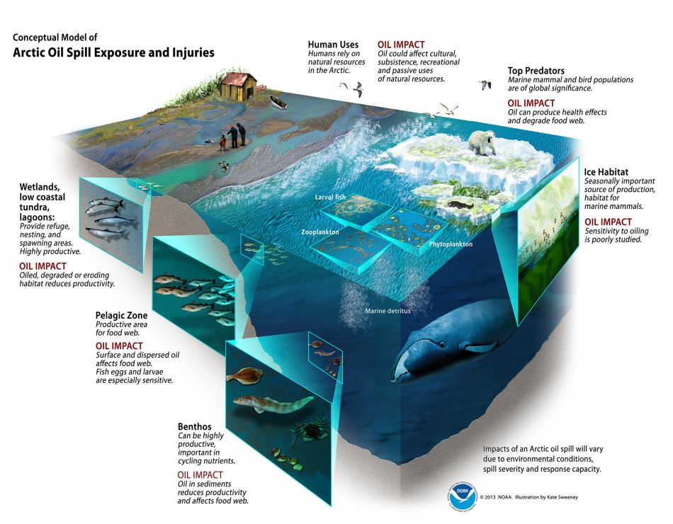 Cut-away illustration of wetlands, pelagic zone, and benthos.