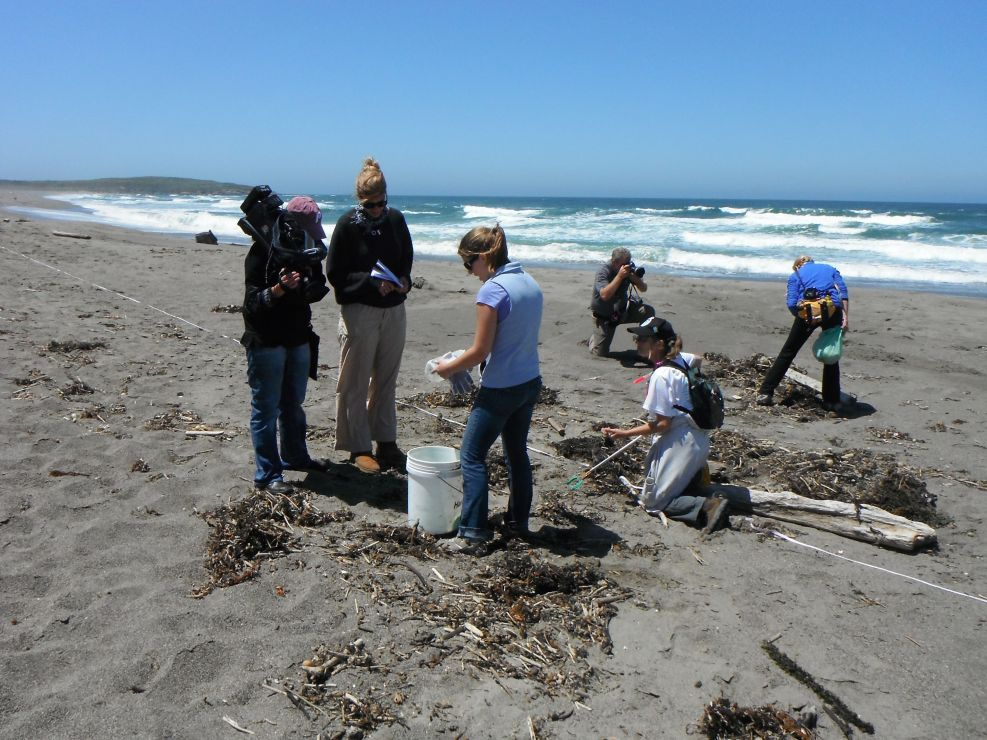 Image of  marine debris monitoring group on the Northern California coastline.