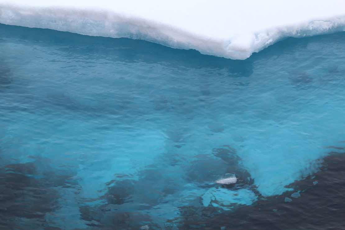 Blue ice visible beneath clear Arctic waters.