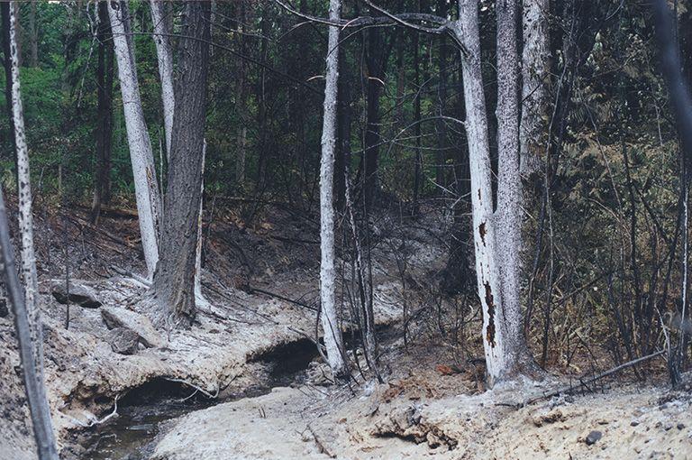 Scorched vegetation along Whatcom Creek.
