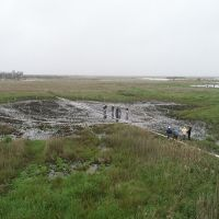 Wetland with burned area.