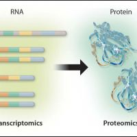 An image with four illustrations reading from left to right: DNA/Genomics, RNA/Transcriptomics, Protein/Proteomics, and Metabolites/Metabolics.
