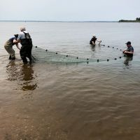 Men with seining net in the water.