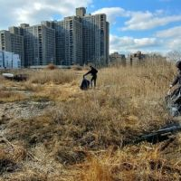 Three people walk along a shoreline and collect debris from the grass. Several large buildings can be seen in the background.
