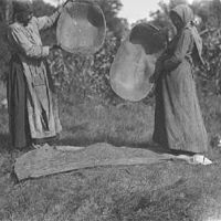 Two people dumping baskets of wild rice onto the ground.