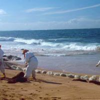 Workers cleaning up oil on a beach.