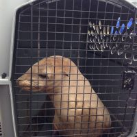 Sea lion sitting in a crate
