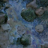 Oil on a pool of water on a rocky beach.