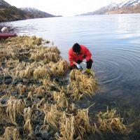 Scientist sampling in vegetation next to water.