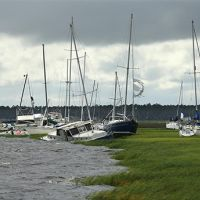 Sailboats askew by the edge of a marsh.