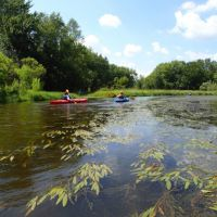 Kayakers on a river with vegetation.