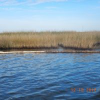 Oil stained marsh and boom in water.