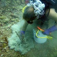 Diver working on the ocean floor.