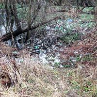 Marsh with vegetation and trash.