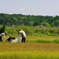 Three people practicing sampling in a marshy area.