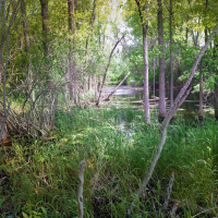 A landscape photo of a wooded area with a river going through it.