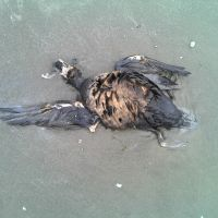 Dead bird laying in wet sand.