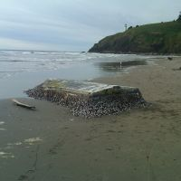 A small, overturned boat on a beach, covered with barnacles.