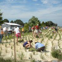 People planting grass.