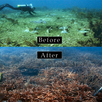 A before image (top) and after image (bottom) of coral habitat.